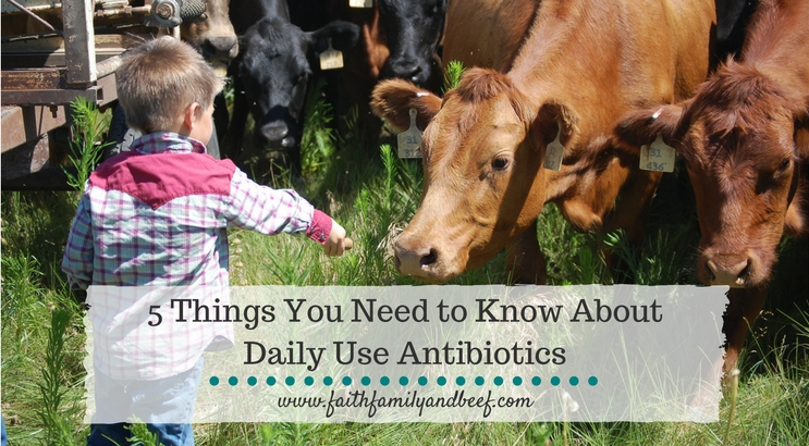 5 Things You Need to Know About Daily Use Antibiotics