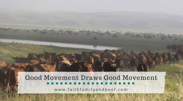 Good Movement Draws Good Movement