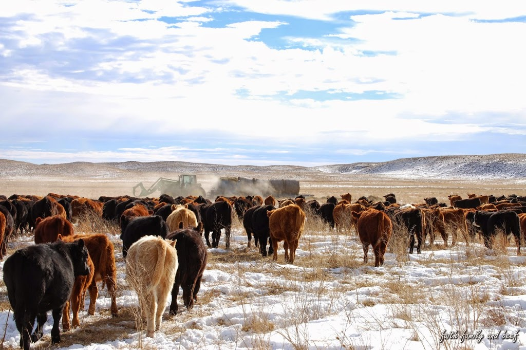 Better Equipped Calves