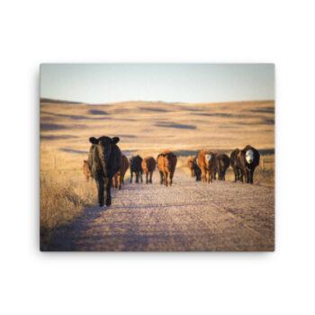 Ranch Life Photograghy