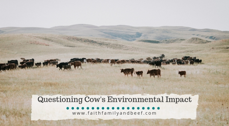 Questioning Cow's Environmental Impact